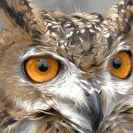 Israeli Eagle Owl