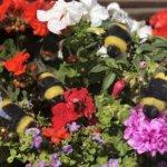 Needle Felting - Bees