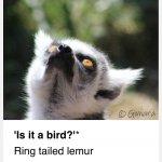 'Is it a bird?'