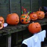 Pumpkin Trail & Treats - tickets now on sale