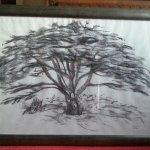 Tree@YSP
