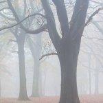 Woodland - Mirfield, West Yorkshire