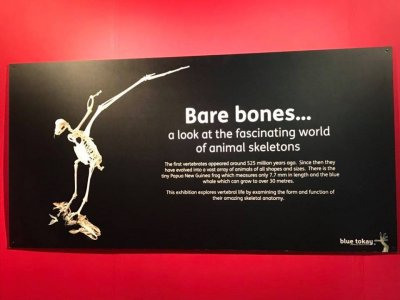 Bare Bones Exhibition