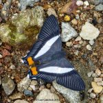 Birds, Butterflies & The Botany of the Reverend Kemble Martin