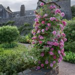 Compton Castle garden walks