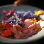 Wild Food & Foraging retreat - 3 nights