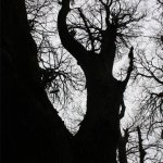 An encounter with an extraordinary tree (1)