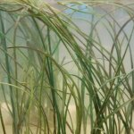 Artifical sea grass for BBC Natural History Unit