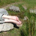 Arts & Ecology on Dartmoor