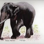 Bondla Elephant