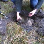 Excavating the bog pantry