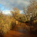 Exminster Marsh - Devon