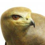 Female Buzzard in foundry bronze