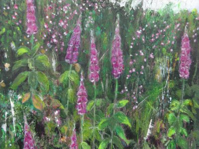 Foxgloves on a Devon Bank