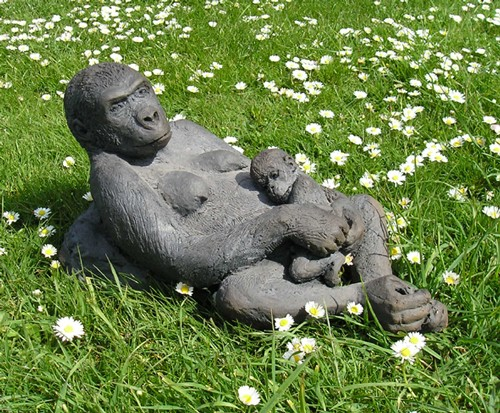 Gorilla - mother and baby