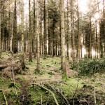Haldon Woods