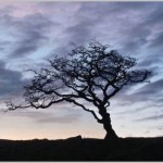 Harford Moor Dawn
