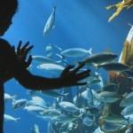 Helsinki SeaLife