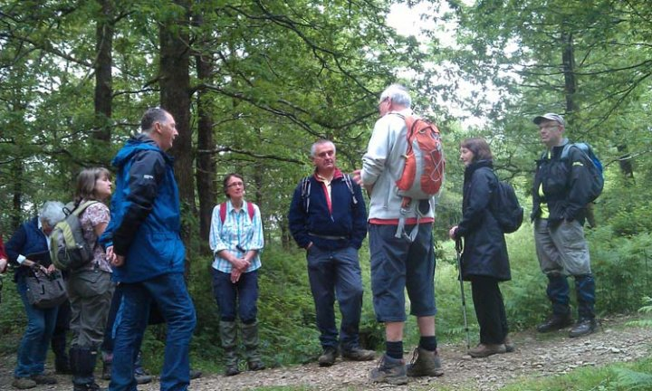 Hembury Woods with John Risdon