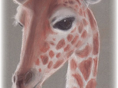 A tribute to the Paignton Zoo Giraffes - chalk