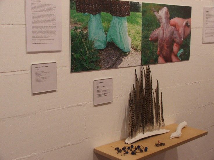 Installation 'Art, Economy and Ecology' at CCANW