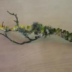 lichen parrot branch