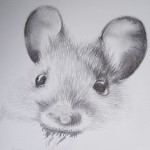 Mouse (in progress)