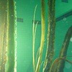 New large Kelp. Pool Tests