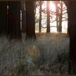 New Years Day in Richmond Park