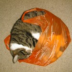 Not letting the cat out of the bag but.....