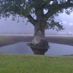 oak in a moat