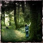 Occombe woods and the velvet tree