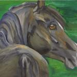 pasha, arab stallion