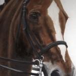 Pete's Horse