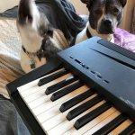 Pets Practising!