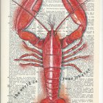 Red : the world is your lobster