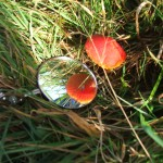 Reflecting a Toadstool