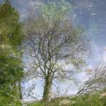 Sagle's Tree