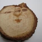 Oak talisman
