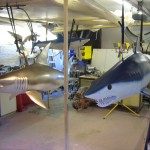 The 3 Sharks