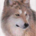 The Big Bad Wolf 2