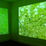The Inner Quarry (2), Kate Paxman