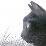 The Witch's Cat II