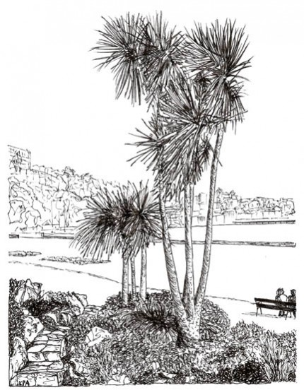 Torbay Palm (Pen and Ink Drawing)