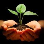 New beginnings Fresh Start -Fresh Hope