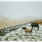 Winter on Dartmoor