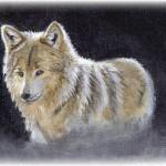 Wolf - oils