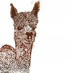 Alpaca Print / Illustrators and Printmakers