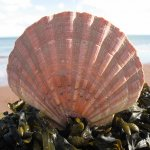 Seashell Communications / Seashell Communications