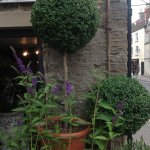 Twig Of Tetbury / Twig of Tetbury - Flowers for all occasions, Topiary Plants Tree